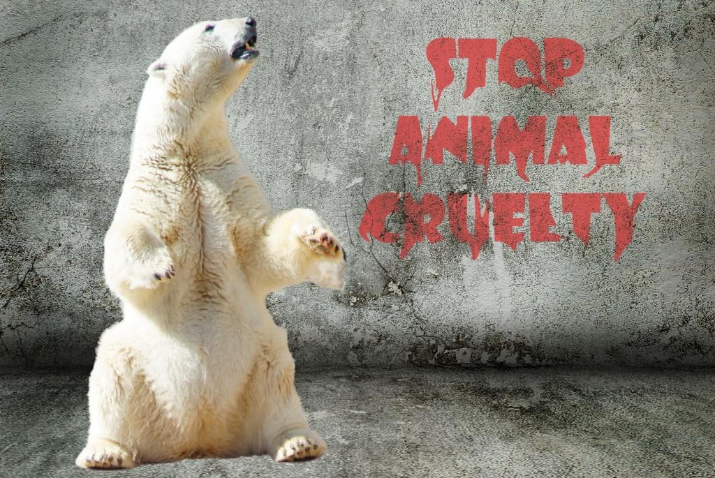Urso polar em pé num fundo cinza com a escrita Stop Animal Cruelty.